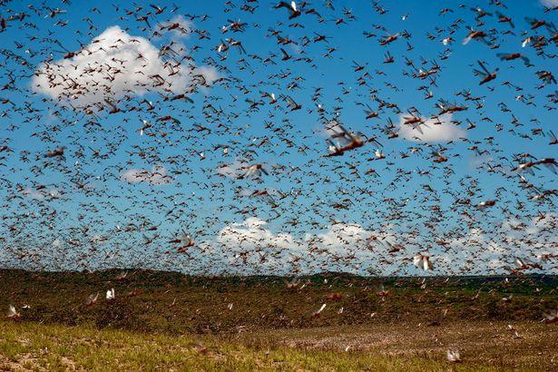 Parshas Behar/Bechukosai: A Shmittah a Day Keeps the Locusts Away!