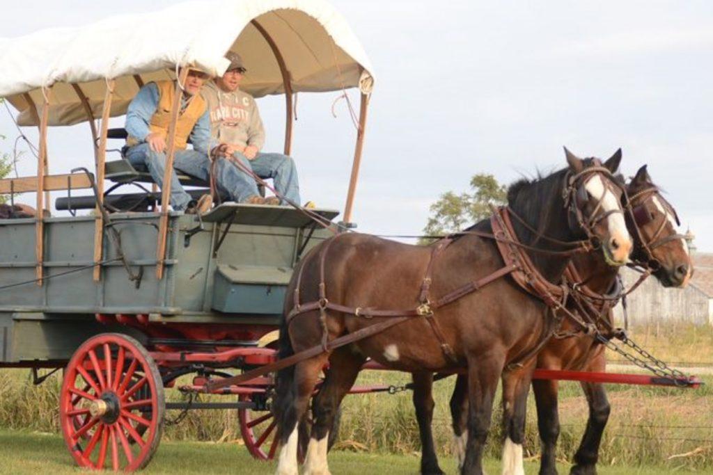 """Parshas Vayigash: """"Hold your Horses"""" on Those Wagons!"""